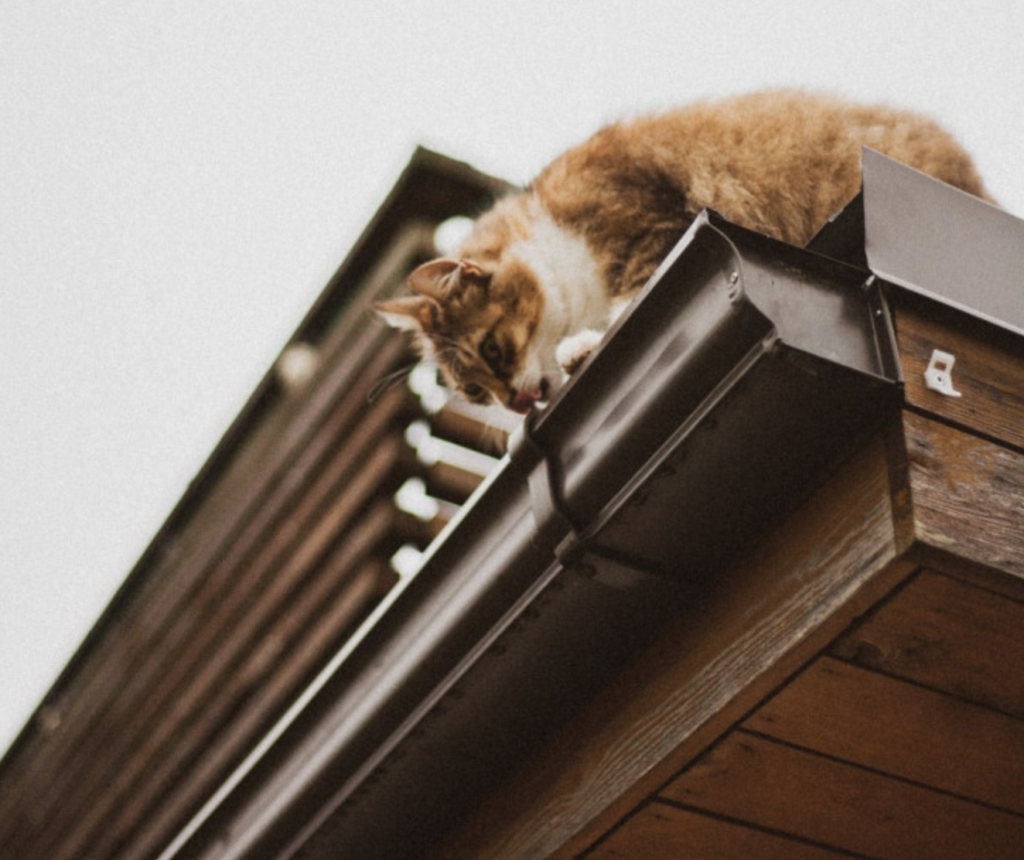 gutter with cat
