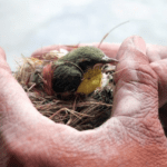 How Do I Get Rid of Birds Nest in My Dryer Vent? - Bird nest on man hands
