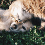 Why Do We Keep Pets at Home? - Cat and dog