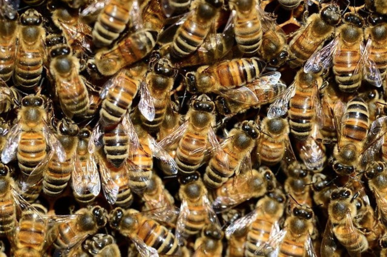 How to Keep Bees Away From your House Naturally - Many bees